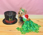 Green Sequin Lace Glamour Dog Dress