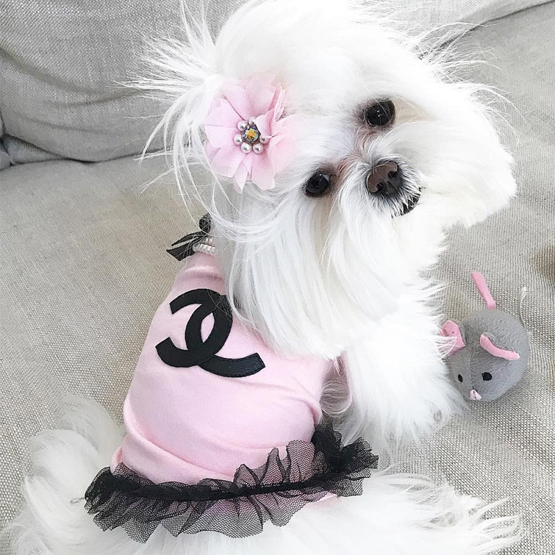 Designer Inspired Baby Clothes | Baby Pink Pearl Designer Inspired Dog Glamour Shirt