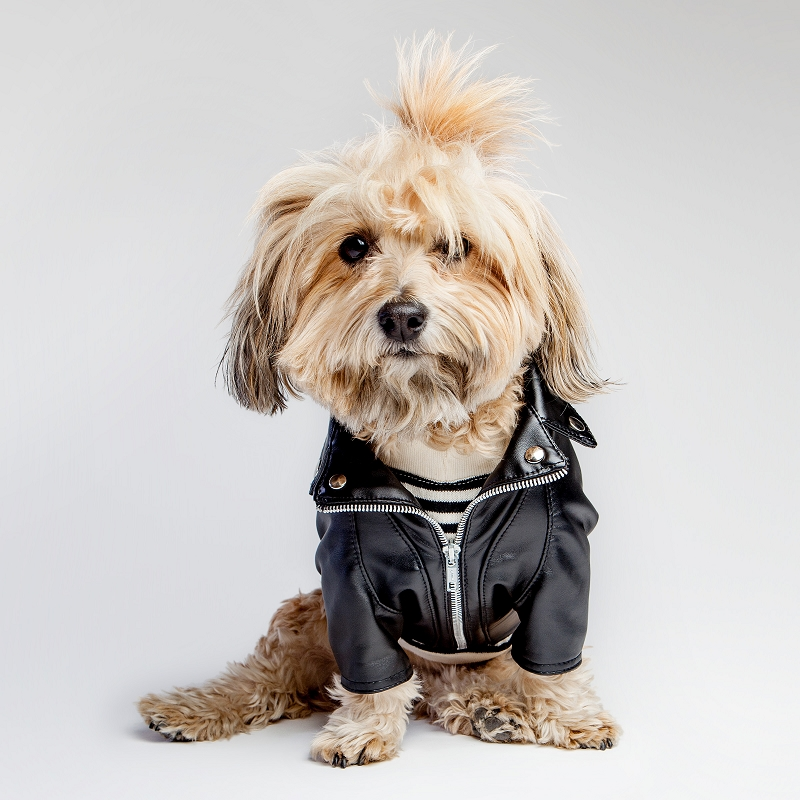 Zippers and Studs Biker Rocker Dog Leather Jacket