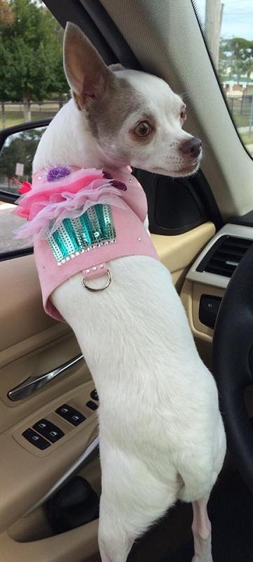My Cupcake Pink Ultrasuede Dog Harness