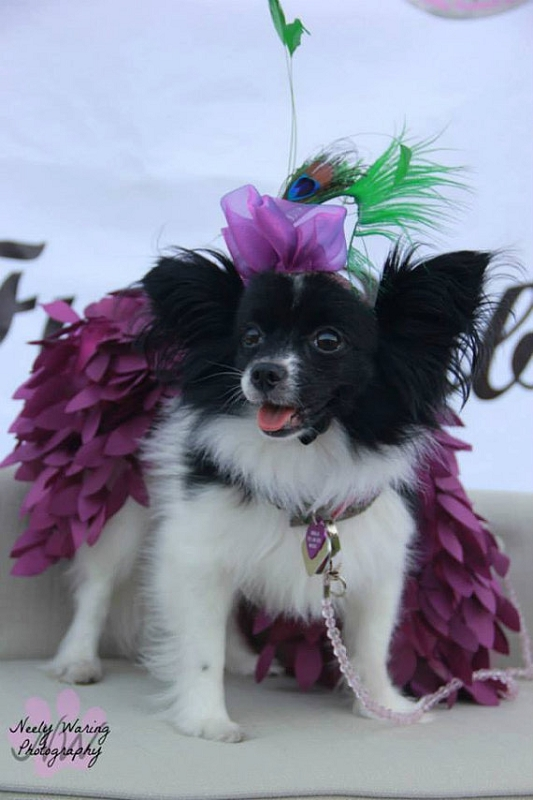 Mardi gras hat statement dog headpiece feather flower pet fascinator