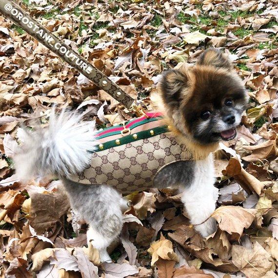 33ba88932 Designer Monogram Red and Green Stripe Beige Dog Coat