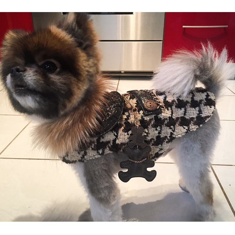 Ysl Luxury Winter Dog Jacket Designer Wool Harness Coat