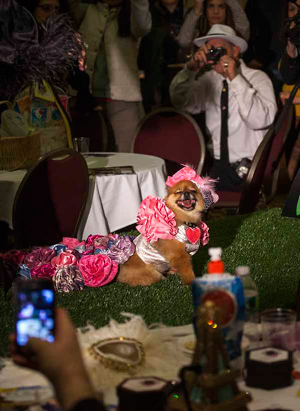 NYC Pet Fashion Show