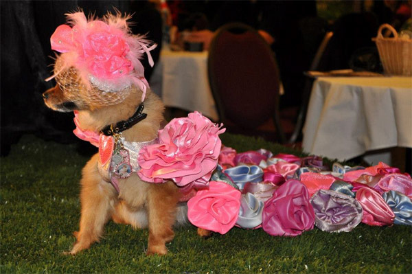 orostani couture NY dog show