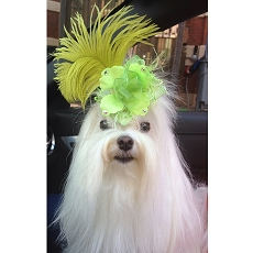 Lime Green Swarovski Rosette Ostrich Feather Glam Dog Hair Bow Clip