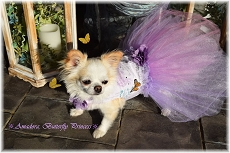 Lavender Rose Paris Butterfly Tutu Dog Dress
