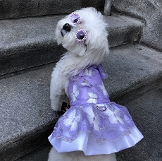 Butterfly Garden Lavender Dog Dress