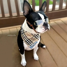 Fashion Plaid Dog Bandana Collar