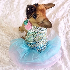 Whimsical Cotton Candy Unicorn Sequin Dog Tutu Dress