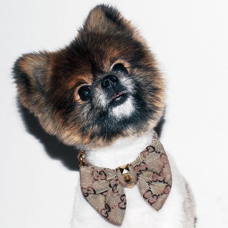 gucci dog collar. designer gg brown monogram luxury bow tie dog collar gucci b