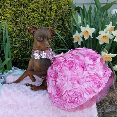 All That Glitters Pink Sequin 3D Flower Birthday Party Dog Dress