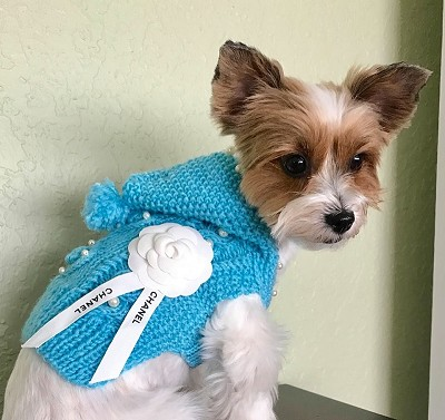 Camellia Flower and Pearl Hand Knit Dog Fashion Sweater