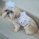 Rock Garden Floral Studded Couture Dog Harness 1-SMALL