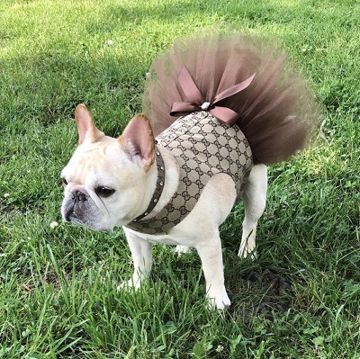 Fashion Chic Dog Brown Tutu Dress