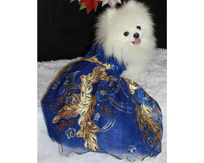 Limited Edition Royal Blue and Gold Leaf Couture Glamour Dog Gown