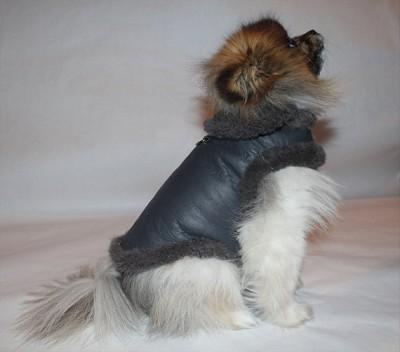 Genuine Leather Shearling Studded Luxury Dog Coat
