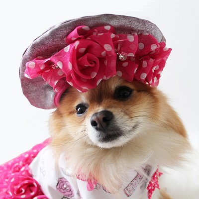 Ma Cherie Rose Beret French Paris Dog Hat 12""