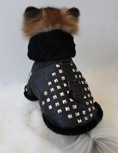 Genuine Leather Shearling Studded Luxury Dog Coat