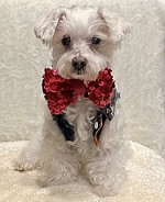Red Sequin Fashion Dog Bow Tie