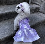Butterfly Garden Lavender Dog Dress 1- Sz XS