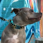 Limited Edition Aqua Ghost Dog Collar and Leash Set