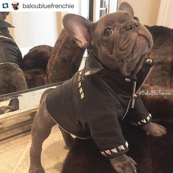 Zippers and Studs Biker Rocker Dog Leather Jacket