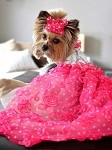 Ma Cherié Pink Rose Paris Dog Dress