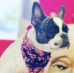 Holographic Sequin Dog Bandana Necklace