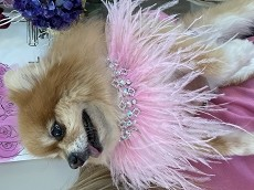 Ostrich Feather Barbie Bling Necklace Collar