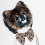 Luxury Dog Fashion Bow Tie Collar